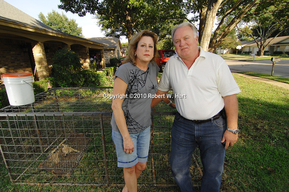 Irving residents, Dannette Hines and husband, Ronald, kneel next to the hog trap in their front yard on Quail Valley Street in south Irving, Texas, on October 21, 2010, where feral hogs destroyed their lawn earlier this week.