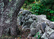 Stone fence, Martha's Vineyard, Massachusetts,, USA