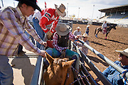 November 2, 2008 -- PHOENIX, AZ: A bareback rider leaves the chute on his bronc at the Arizona High School Rodeo at the Arizona State Fair in Phoenix. Teams from across the state participate. The Arizona High School Rodeo Association sponsors a full season of high school rodeo that culminate in a championship rodeo in June.  Photo by Jack Kurtz / ZUMA Press