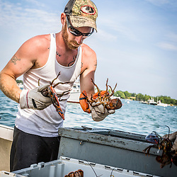 """Ryan Schultz, crew on the lobster boat, """"Overkill"""", unloading lobsters at the Friendship Lobster Co-op in Friendship, Maine."""