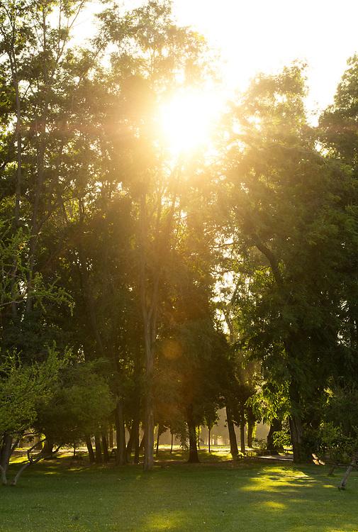 Sunlight between the trees in Padre Hurtado Park formerly known as Parque Intercomunal de la Reina at La reina district, Santiago de Chile
