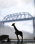 Giraffe and Bridge by Star Nigro<br /> <br /> <br /> ©2021 All artwork is the property of STAR NIGRO.  Reproduction is strictly prohibited.