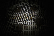 Una parete della galleria imbullonta, s'intravedono delle vene di carbone