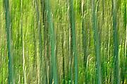 abtsraction of trees - motion studies