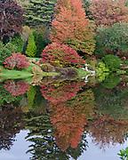 Autumn at the Asticou Azalea Garden