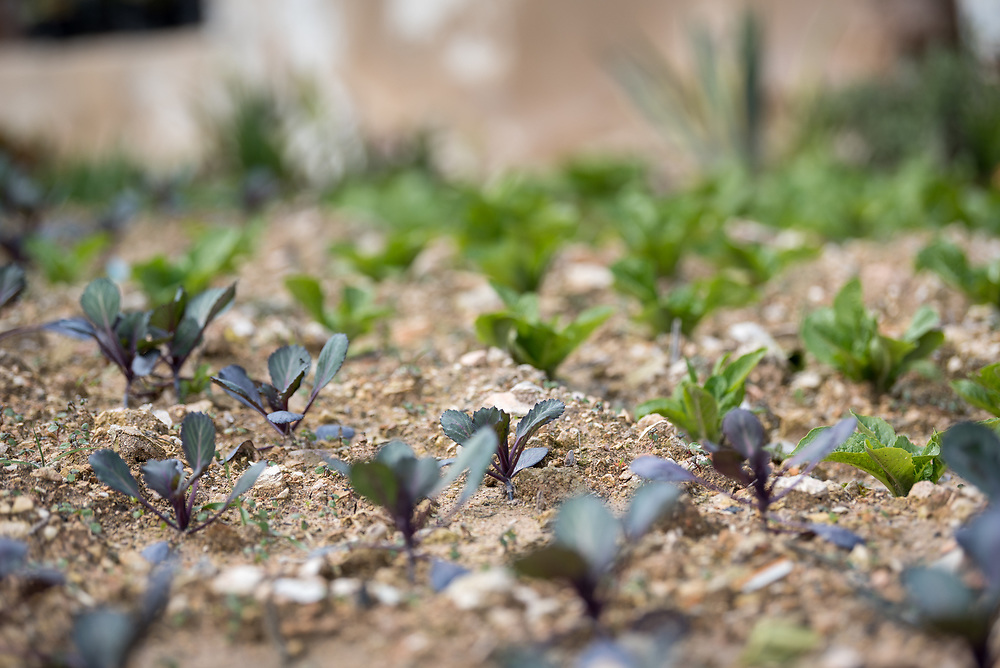 16 February 2020, Irbid, Jordan: Crops grow in a garden in Al-Mazar. By providing tools and seeds, a Lutheran World Federation project has helped 150 families grow food for themselves and, in some cases, also earn an income from selling their surplus at local markets.