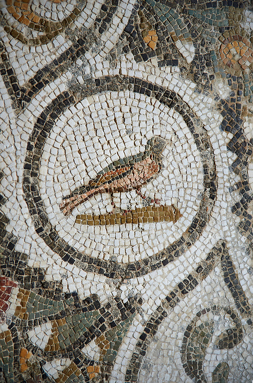 Picture of a Roman mosaics design depicting wreaths running around medallions of birds and fishes, from the ancient Roman city of Thysdrus. 3rd century AD. El Djem Archaeological Museum, El Djem, Tunisia. .<br /> <br /> If you prefer to buy from our ALAMY PHOTO LIBRARY Collection visit : https://www.alamy.com/portfolio/paul-williams-funkystock/roman-mosaic.html . Type - El Djem - into the LOWER SEARCH WITHIN GALLERY box. Refine search by adding background colour, place, museum etc<br /> <br /> Visit our ROMAN MOSAIC PHOTO COLLECTIONS for more photos to download as wall art prints https://funkystock.photoshelter.com/gallery-collection/Roman-Mosaics-Art-Pictures-Images/C0000LcfNel7FpLI