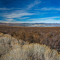 Rabbitbrush and other shrubs grow along the semi-arid shores of saline Mono Lake in the eastern Sierra Nevada in Mono County, California.