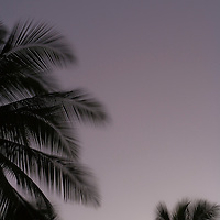 Crescent moon and palms at sunset
