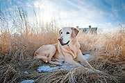 Canine portait session with Logan and Kim Schierl