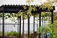 High Line CPI Planting | Rainbow Block Association Garden - Bronx, NY