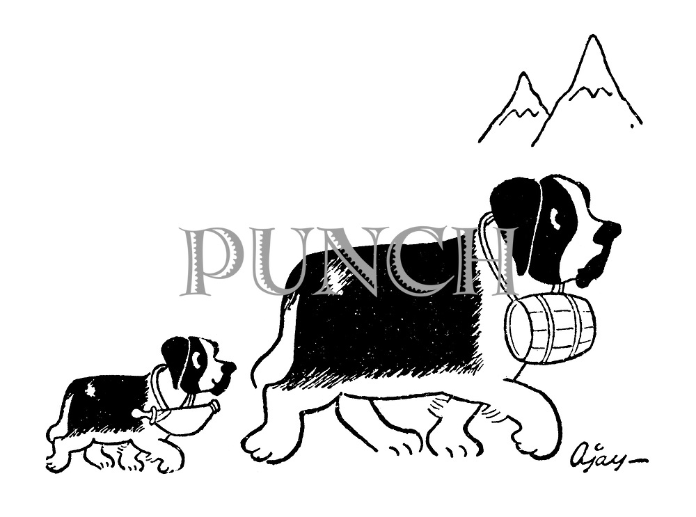 (St Bernard puppy follows its parent through the mountains carrying a baby bottle instead of a brandy barrel)