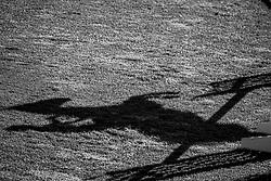 Jumping shadows<br /> Spruce Meadows Masters - Calgary 2019<br /> © Hippo Foto - Dirk Caremans<br />  05/09/2019
