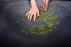 THEMENBILD - Bei der traditionellen Produktion von Schwarztee, orthodoxe Teeproduktion genannt, durchlaufen die Teeblätter fünf Stufen: das Welken (Withering), damit die Blätter weich und zart werden, das Rollen (Rolling), das Aussieben, die Oxidation und zum Schluss die Trocknung (Firing). Um die Blätter nach dem Pflücken zu erweichen, wurden sie früher zwei Stunden in die Sonne gelegt. Später verwendete man Welkhürden in speziellen Hallen, in denen eine Temperatur von 20 bis 22 °C herrschte. Der Welkprozess dauerte dann bis zu 24 Stunden. Heute werden meistens so genannte Welktunnel eingesetzt, die die Teeblätter auf Fließbändern durchlaufen. Die Stärke der Welkung wirkt sich (im umgekehrten Verhältnis) auf den Grad der später erzielbaren Oxidation aus. Aufgenommen in Zhongcunba am 7. April 2016 // A worker dries tea leaves in a cooking pot in Zhongcunba Village of Xuan'en County, central China's Hubei Province, April 7, 2016. EXPA Pictures © 2016, PhotoCredit: EXPA/ Photoshot/ Song Wen<br /> <br /> *****ATTENTION - for AUT, SLO, CRO, SRB, BIH, MAZ, SUI only*****