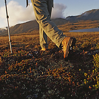 Backpacker hikes across tundra in Logan Mountains.