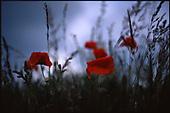 Poppy's | Colour