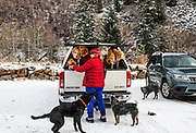 """Independence Pass Foundation volunteer Becki Braun leashes some of the 12 dogs she's walking up the closed pass outside of Aspen, Colorado. Braun was excited for the season closure, because it gives her a safe place to walk dogs without having to deal with traffic. Braun helps with what she calls """"poop patrol."""" She helps with maintaining the trash cans on the pass and the stash of dog waste bags."""
