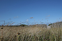 long grass in field on the Aran Islands County Galway Ireland