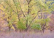 Autumn design, Idaho