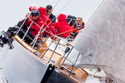 Blackfish sailing in the Opera House Cup.