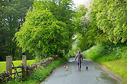 Woman strolling with pair of terrier dogs along a country lane on a rainy day at Swinbrook  in The Cotswolds, UK