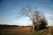 dead trees in rural landscape France