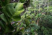 Jungle Canopy, Manu, Peru, rainforest, leaves, trees, green