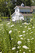 A small horse barn and field of wildflowers in Glenview, Illinois, USA.