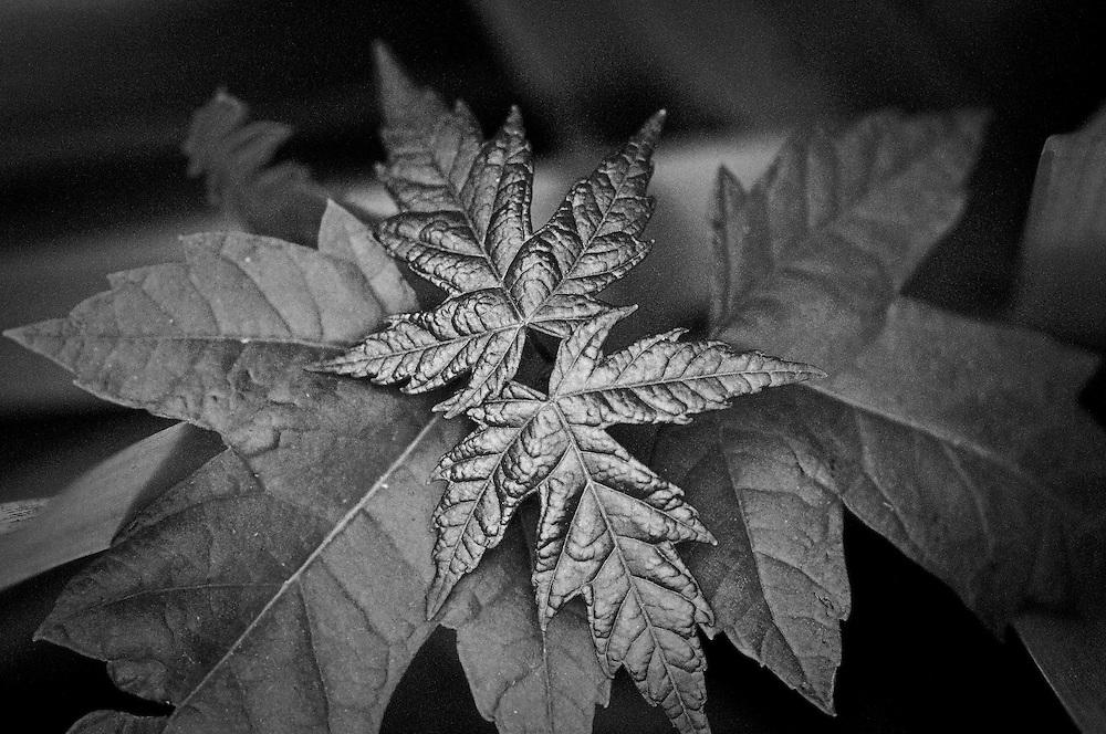 Metallic Leaves