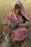IND.MWdrv04.193.x..Mishri Yadav harvests wheat in Ahraura Village, Uttar Pradesh, India. Her family must pay half of the harvest to the owner of the land that they farm. They grow one planting of wheat and then rice during the rest of the year. Revisit with the family, 2004. The Yadavs were India's participants in Material World: A Global Family Portrait, 1994 (pages: 64-65), for which they took all of their possessions out of their house for a family-and-possessions-portrait. Work..
