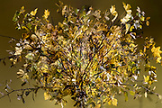 autumn season colored leaves floral bouquet composite