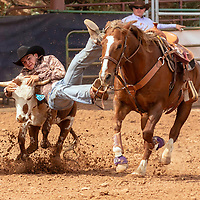 """Photo: Jeffery Jones<br /> Adriano Duran leaps from his horse to try to wrestle down a sterr Saturday during the New Mexico High School Rodeo Association State Finals at Red Rock Park.  Duran's steer got loose and he ended up with a """"no time""""."""