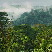 The lush jungle around São João de Angulares.