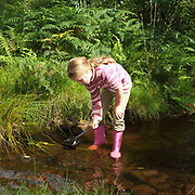 A young girl pond dipping in a shallow stream, Danby, North York Moors, North Yorkshire, UK