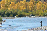 The season's changing leaves provide a picturesque backdrop as an angler tries his luck on the Gros Ventre River.