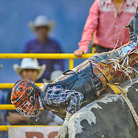 Arrow Secody falls of his bull, Minion, during the Megabucks bull riding competition on Friday at Dean C. Jackson Arena in Window Rock.