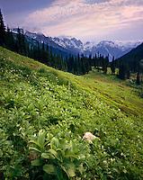 Alpine Meadows near Buck Creek Pass, Glacier Peak Wilderness Washington USA
