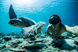 Turtles Underwater diving with the turtles in the Seychelles. Whales off the Mozambique coast