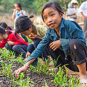 CAPTION: Phuong works with her classmates to weed the vegetable garden. Pupils attending this school come from ten different minority villages, some of which are as many as 30 km away. For many, the only way to get to school is to walk. Those that live too far away for this have no option but to sleep at the school during the week and return to their villages for the weekend. Not only does the vegetable produce provide students with a more varied and nutritious diet throughout the week, it also reduces the school's food expenditure. LOCATION: Huy Tuong Primary School, Huy Tuong, Son La Province, Vietnam. INDIVIDUAL(S) PHOTOGRAPHED: Phuong.