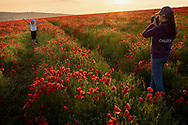 Two sisters pose for photos in a field of poppies near Goodwood, West Sussex.<br /> Picture date Thursday 24th June, 2021.<br /> Picture by Christopher Ison. Contact +447544 044177 chris@christopherison.com