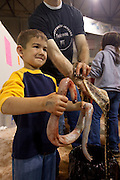 SWEETWATER, TX - MARCH 14: A young man poses with a skinned western diamondback rattlesnake during the 51st Annual Sweetwater Texas Rattlesnake Round-Up, March 14, 2009 in Sweetwater, Texas. Approximately 24,000 pounds of rattlesnakes will be collected, milked for venom and the meat served to support charity. (Photo by Richard Ellis)
