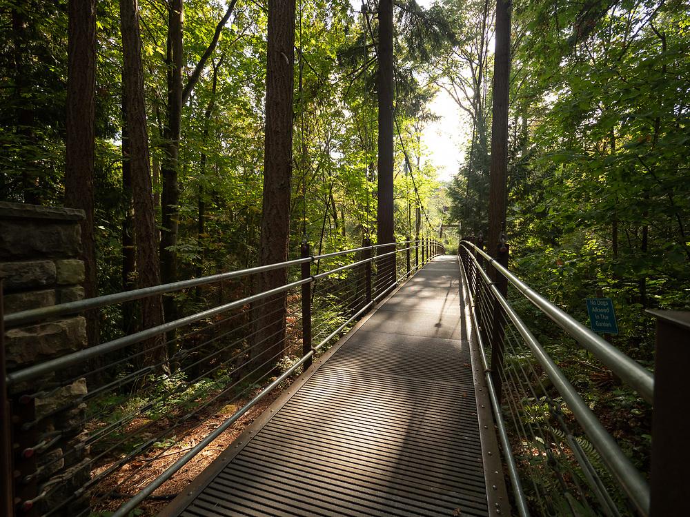 United States, Washington, Bellevue, supension bridge at Ravine Experience of Bellevue Botanical Garden