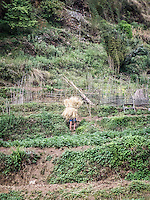 Man carrying dried plant stalks in Swanta village.