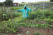 Simple scarecrow in vegetable garden, Shottisham, Suffolk, East Anglia, England