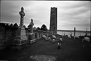 06-10/04/1964.04/06-10/1964.06-10 April 1964.Views on the River Shannon. Young lambs tread softly on the hallowed ground of Clonmacnoise, Co. Offaly.