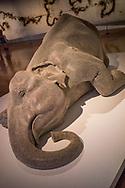 Sculpture of elephant in Brisbane museum
