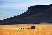 An old homestead near Square Butte,Montana