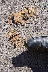 Person stepping on dog excrement,