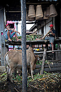 Two men sits on a stilt deck in a traditional Reungao ethnic house. A cow stands right to them. Village of Kontum plateau, Pleiku area, Vietnam, Asia