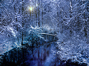 Snow covered trees next to a stream with blue overtones.